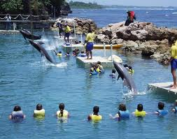 dolphins cove jamaica